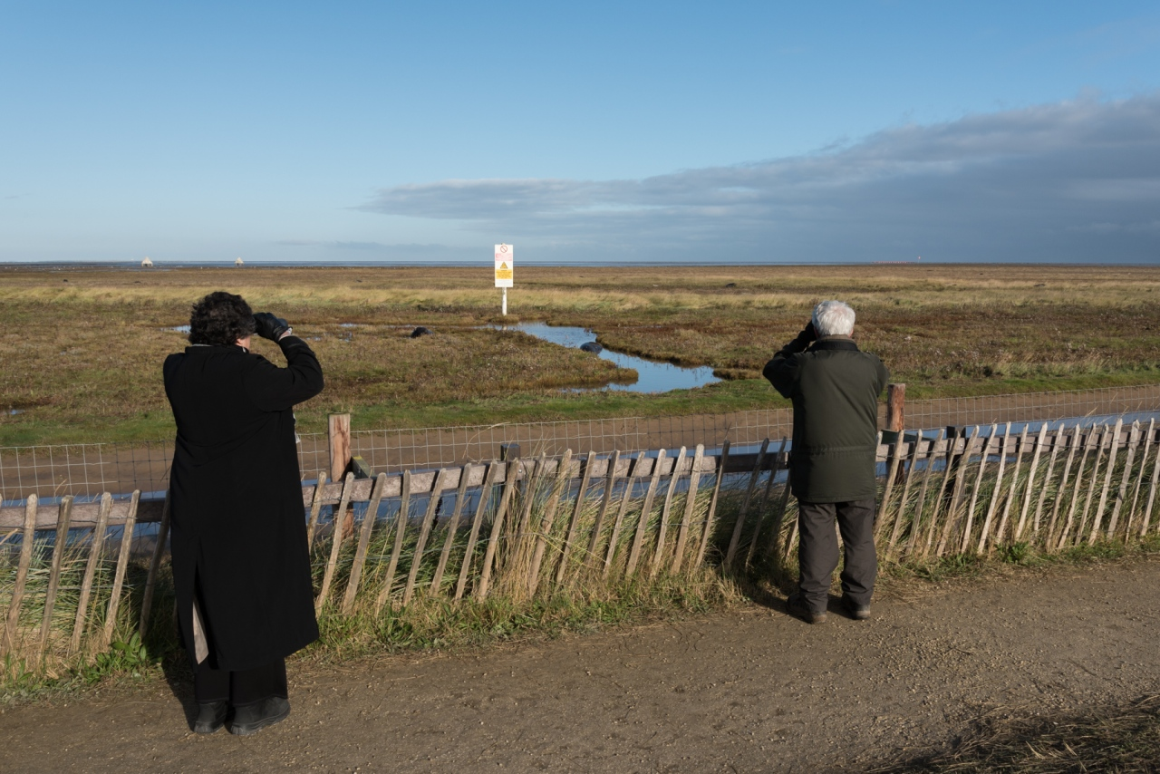 Seal Watchers - Donna Nook